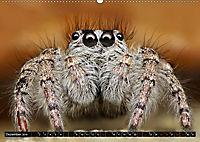 Faszination Makrofotografie: Springspinnen (Wandkalender 2019 DIN A2 quer) - Produktdetailbild 12