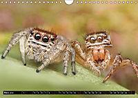 Faszination Makrofotografie: Springspinnen (Wandkalender 2019 DIN A4 quer) - Produktdetailbild 3