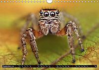 Faszination Makrofotografie: Springspinnen (Wandkalender 2019 DIN A4 quer) - Produktdetailbild 9