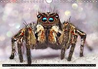 Faszination Makrofotografie: Springspinnen (Wandkalender 2019 DIN A4 quer) - Produktdetailbild 1