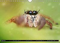 Faszination Makrofotografie: Springspinnen (Wandkalender 2019 DIN A4 quer) - Produktdetailbild 6