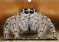 Faszination Makrofotografie: Springspinnen (Wandkalender 2019 DIN A4 quer) - Produktdetailbild 12