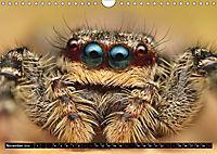 Faszination Makrofotografie: Springspinnen (Wandkalender 2019 DIN A4 quer) - Produktdetailbild 11