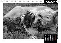 Faszination Schottisches Hochlandrind (Tischkalender 2019 DIN A5 quer) - Produktdetailbild 7
