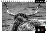 Faszination Schottisches Hochlandrind (Tischkalender 2019 DIN A5 quer) - Produktdetailbild 9