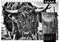 Faszination Schottisches Hochlandrind (Tischkalender 2019 DIN A5 quer) - Produktdetailbild 10