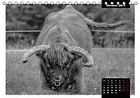 Faszination Schottisches Hochlandrind (Tischkalender 2019 DIN A5 quer) - Produktdetailbild 13