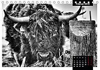 Faszination Schottisches Hochlandrind (Tischkalender 2019 DIN A5 quer) - Produktdetailbild 2