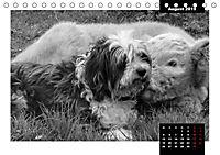 Faszination Schottisches Hochlandrind (Tischkalender 2019 DIN A5 quer) - Produktdetailbild 8