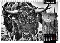 Faszination Schottisches Hochlandrind (Wandkalender 2019 DIN A4 quer) - Produktdetailbild 7