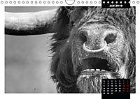 Faszination Schottisches Hochlandrind (Wandkalender 2019 DIN A4 quer) - Produktdetailbild 3
