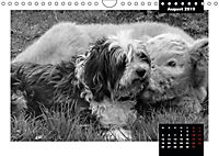 Faszination Schottisches Hochlandrind (Wandkalender 2019 DIN A4 quer) - Produktdetailbild 11