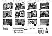 Faszination Schottisches Hochlandrind (Wandkalender 2019 DIN A4 quer) - Produktdetailbild 12