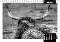 Faszination Schottisches Hochlandrind (Wandkalender 2019 DIN A4 quer) - Produktdetailbild 13