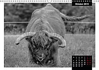 Faszination Schottisches Hochlandrind (Wandkalender 2019 DIN A3 quer) - Produktdetailbild 10