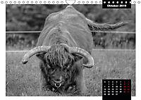 Faszination Schottisches Hochlandrind (Wandkalender 2019 DIN A4 quer) - Produktdetailbild 10
