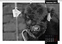 Faszination Schottisches Hochlandrind (Wandkalender 2019 DIN A3 quer) - Produktdetailbild 9