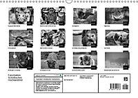 Faszination Schottisches Hochlandrind (Wandkalender 2019 DIN A3 quer) - Produktdetailbild 13
