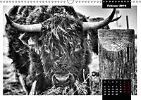 Faszination Schottisches Hochlandrind (Wandkalender 2019 DIN A3 quer) - Produktdetailbild 2