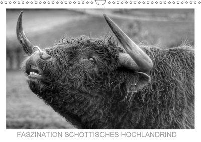 Faszination Schottisches Hochlandrind (Wandkalender 2019 DIN A3 quer), Sigrid Sprengelmeyer