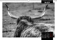 Faszination Schottisches Hochlandrind (Wandkalender 2019 DIN A3 quer) - Produktdetailbild 5