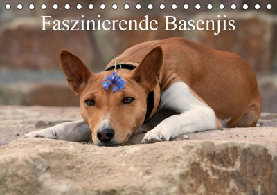 Faszinierende Basenjis (Tischkalender 2019 DIN A5 quer), Angelika Joswig