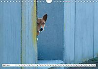 Faszinierende Basenjis (Wandkalender 2019 DIN A4 quer) - Produktdetailbild 3