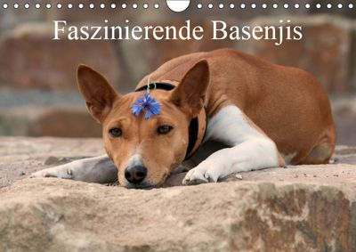 Faszinierende Basenjis (Wandkalender 2019 DIN A4 quer), Angelika Joswig