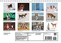 Faszinierende Basenjis (Wandkalender 2019 DIN A4 quer) - Produktdetailbild 13