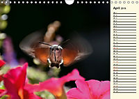 Faszinierende Taubenschwänzchen (Wandkalender 2019 DIN A4 quer) - Produktdetailbild 4