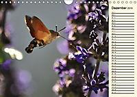 Faszinierende Taubenschwänzchen (Wandkalender 2019 DIN A4 quer) - Produktdetailbild 12