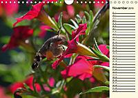 Faszinierende Taubenschwänzchen (Wandkalender 2019 DIN A4 quer) - Produktdetailbild 11