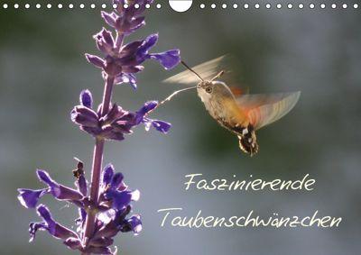 Faszinierende Taubenschwänzchen (Wandkalender 2019 DIN A4 quer), Ingrid Franz