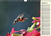 Faszinierende Taubenschwänzchen (Wandkalender 2019 DIN A4 quer) - Produktdetailbild 1