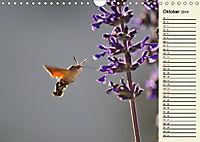 Faszinierende Taubenschwänzchen (Wandkalender 2019 DIN A4 quer) - Produktdetailbild 10