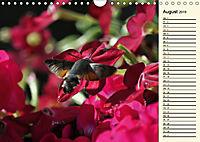 Faszinierende Taubenschwänzchen (Wandkalender 2019 DIN A4 quer) - Produktdetailbild 8