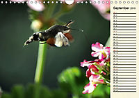 Faszinierende Taubenschwänzchen (Wandkalender 2019 DIN A4 quer) - Produktdetailbild 9