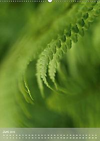 Faszinierender Farn - Eine Sinfonie in Grün (Wandkalender 2019 DIN A2 hoch) - Produktdetailbild 6