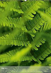Faszinierender Farn - Eine Sinfonie in Grün (Wandkalender 2019 DIN A2 hoch) - Produktdetailbild 5