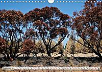 Faszinierendes Kangaroo Island (Wandkalender 2019 DIN A4 quer) - Produktdetailbild 9