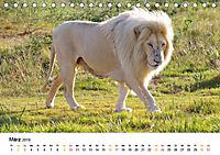 FAZINATION Weisse Löwen (Tischkalender 2019 DIN A5 quer) - Produktdetailbild 3