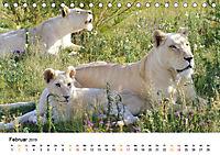FAZINATION Weisse Löwen (Tischkalender 2019 DIN A5 quer) - Produktdetailbild 2