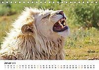 FAZINATION Weisse Löwen (Tischkalender 2019 DIN A5 quer) - Produktdetailbild 1