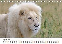 FAZINATION Weisse Löwen (Tischkalender 2019 DIN A5 quer) - Produktdetailbild 8