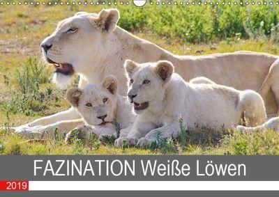 FAZINATION Weiße Löwen (Wandkalender 2019 DIN A3 quer), Thula