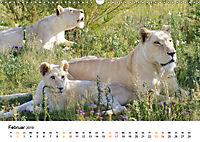FAZINATION Weisse Löwen (Wandkalender 2019 DIN A3 quer) - Produktdetailbild 2
