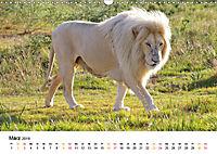 FAZINATION Weiße Löwen (Wandkalender 2019 DIN A3 quer) - Produktdetailbild 3