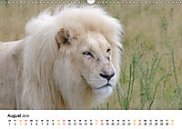FAZINATION Weisse Löwen (Wandkalender 2019 DIN A3 quer) - Produktdetailbild 8