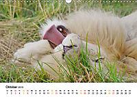 FAZINATION Weisse Löwen (Wandkalender 2019 DIN A3 quer) - Produktdetailbild 10