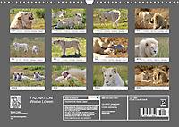FAZINATION Weiße Löwen (Wandkalender 2019 DIN A3 quer) - Produktdetailbild 13